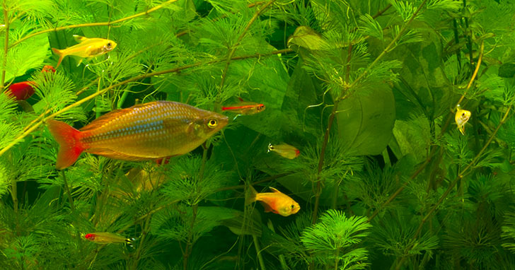 Choosing the Right Fish Supplies For Your Sport Aquarium